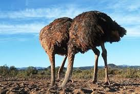 Contact the ostrich